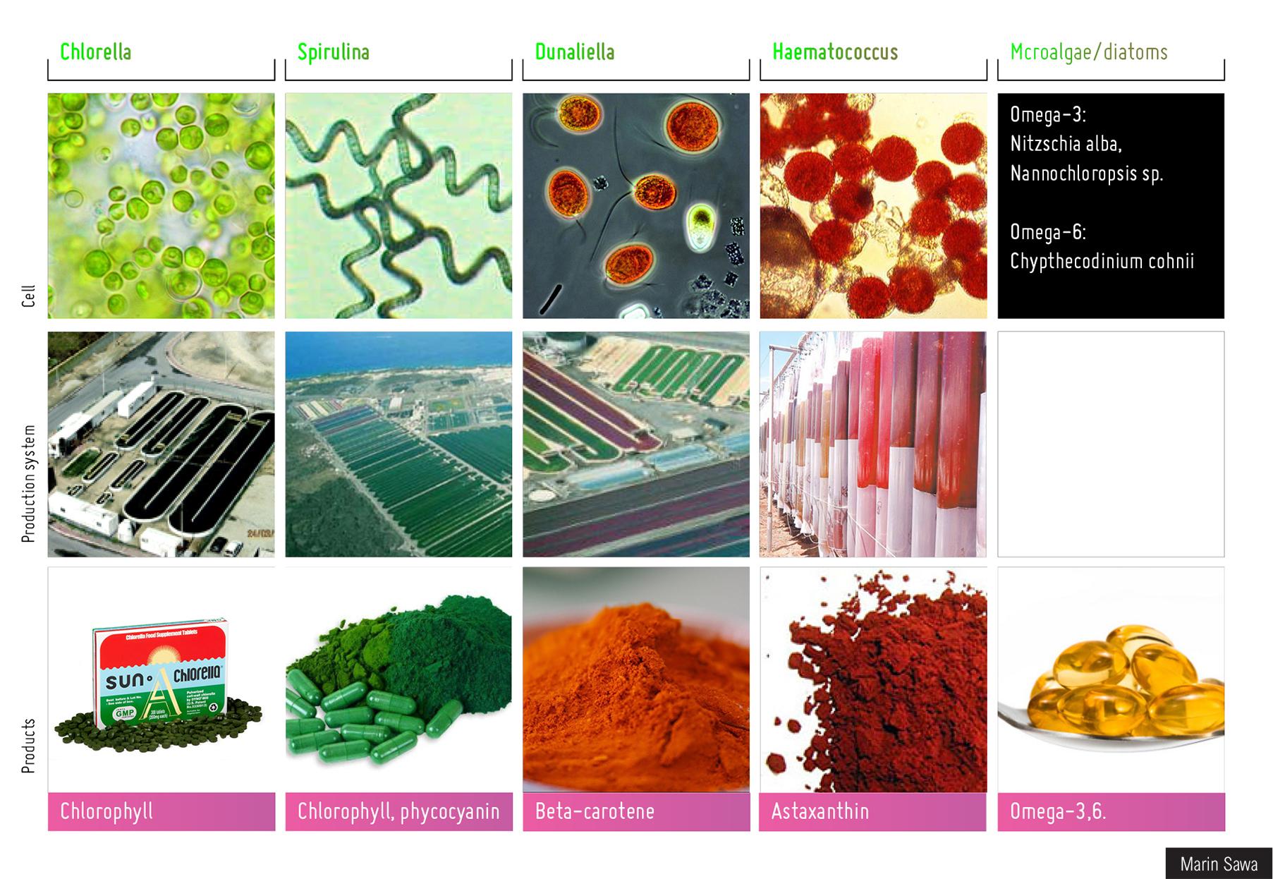 Nutraceuticals from algae