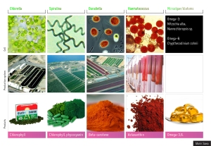 Nutraceuticals from algae